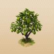File:AvocadoTree.png
