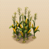 File:Maize.png