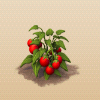 File:Tomatoes.png