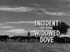 Incident of the Widowed Dove