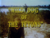 Wild Dog of the Tetons