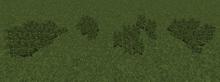 JungleTallFern