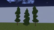 EvergreenNoSnowM