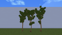 ForestMaple