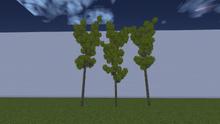 ForestAlder