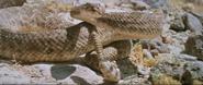 Westworld 1973 rattlesnake 01