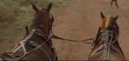 Contrapasso union nitro wagon harness