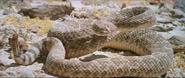 Westworld 1973 rattlesnake 02