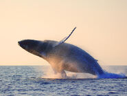Whale-landing-hero 61029559