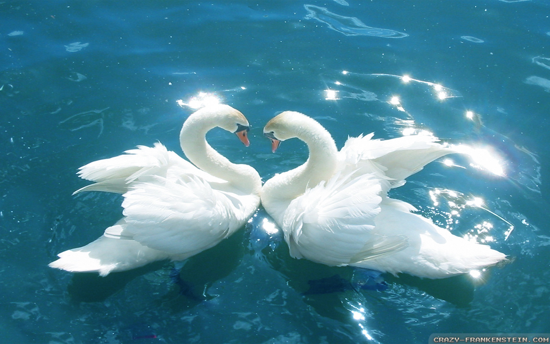 image - love-birds-wallpapers-1920x1200 | whatever you want wiki