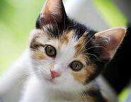 Cat (1)