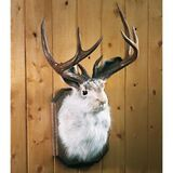 Adopt a Jackalope Today!