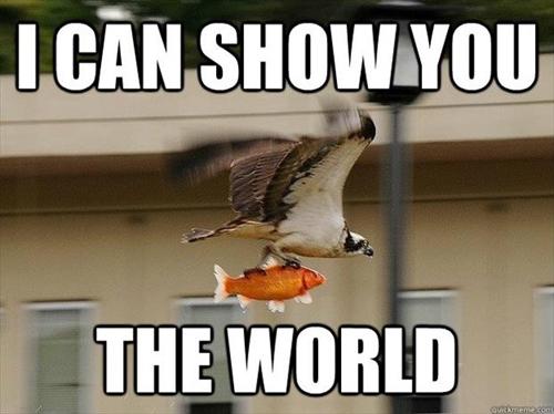 Funny Animal Memes : Image funny animal memes 10.jpg whatever you want wiki fandom