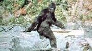 Bigfoot-is real jpg.