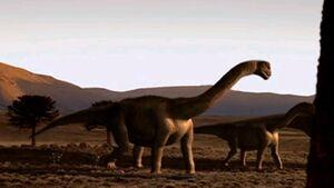 Camarasaurus pair