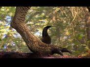 Raptor Toe Claw