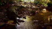Rutiodon in creek