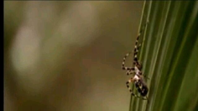 File:Spider on Plant.jpg