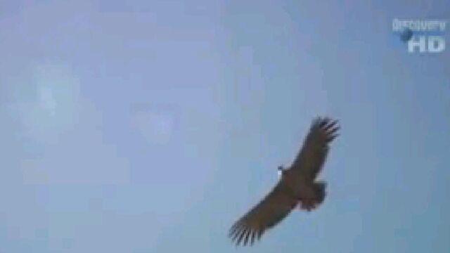 File:When Dinosaurs Roamed America bird .jpg