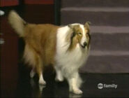 Wl lassie