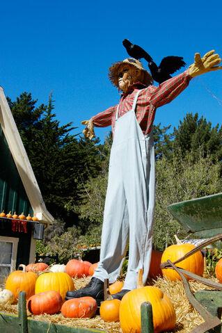 File:Scarecrow1.jpg