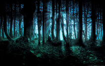 Eerie Forest Windows Background