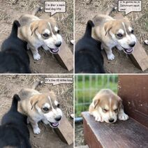 Steger aka Pepehead pup
