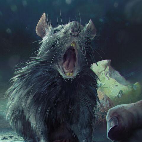 Szczur roznoszący zarazę w <a href=