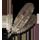 W2 SS pióra harpii