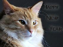 Happy New Year , Dear Friends !