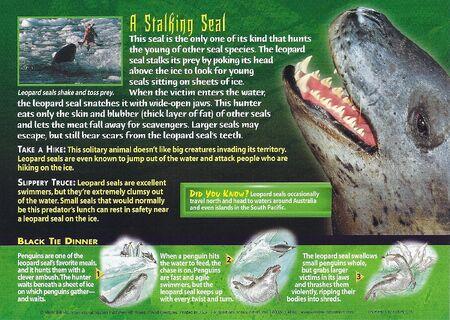 Leopard Seal back