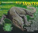 Nile Monitor