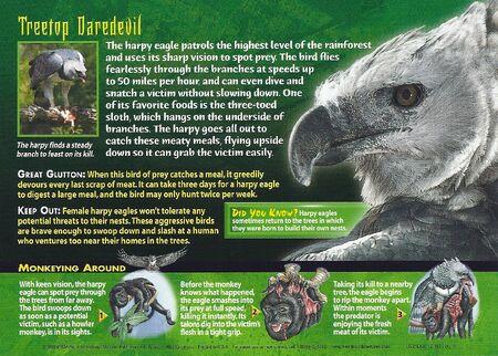 Harpy Eagle back