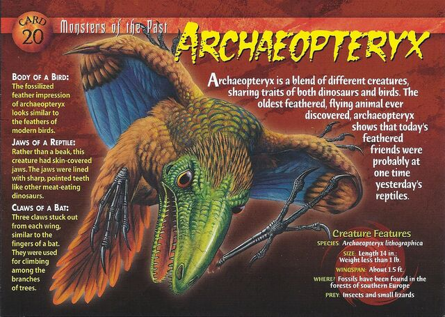 File:Archaeopteryx front.jpg