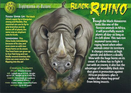 Black Rhino front