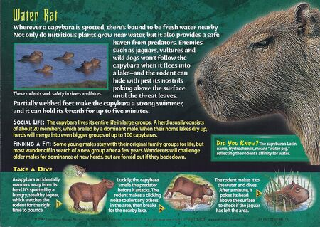 Capybara back