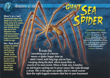 Giant Sea Spider front