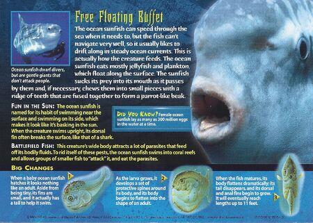 Ocean Sunfish back