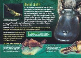 Platypus | Weird n' Wild Creatures Wiki | FANDOM powered by