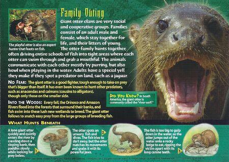 Giant Otter back
