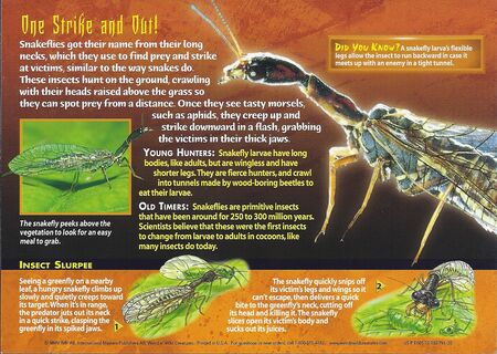 Snakeflies back