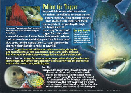 Triggerfish back