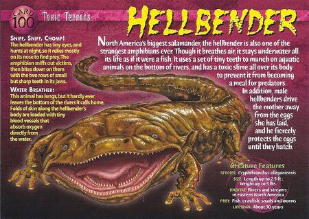 Hellbender front