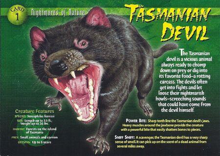 Tasmanian Devil front