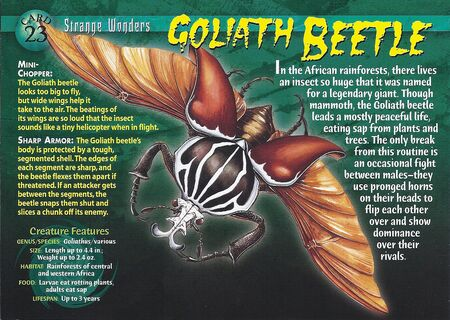 Goliath Beetle front