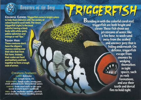 Triggerfish front