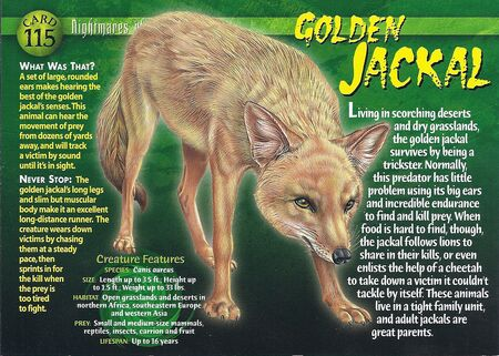 Golden Jackal front