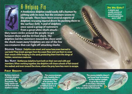 Bottlenose Dolphin back
