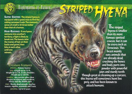 Striped Hyena front