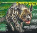 Striped Hyena